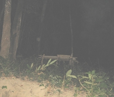 คืน2ดวงธรรมย้ายมาที่ต้นไม้3 มาฆะฤกษ์ เนินเขา สามกอง