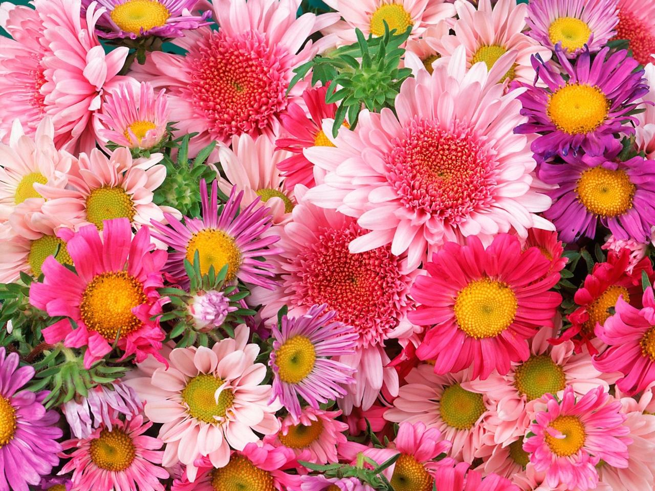 flowers 3bfb31ff