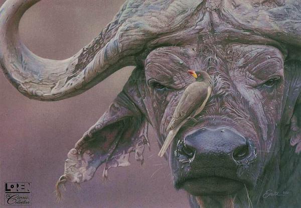 cape buffalo prints