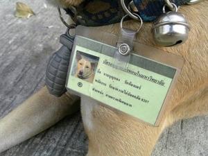 KMUTT SecurityDog2