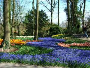 DSCF1430ดอกไม้สีม่วงอ่อน ชนิดนี้ ปลูกง่ายขึ้นเร็ว ให้ดอกเยอะ เสียอย่างเดี๋ยวเมล็ดแพงค่ะ..