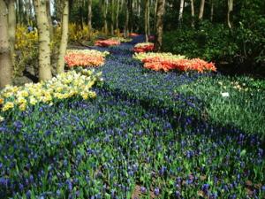 DSCF1443 ปลูกเต็มสวนเป็นทางแบบนี้ก็สวยค่ะ..
