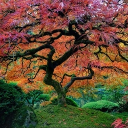 TreeOrange