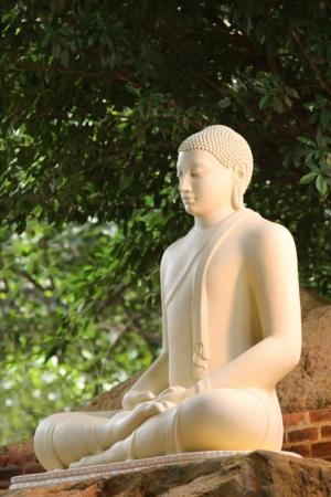 Buddhawhite