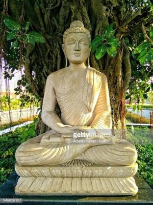 Buddha bodhi