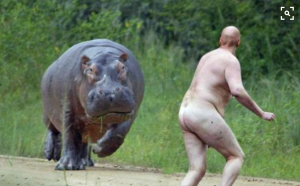 Hippo and a man