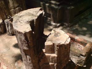 ต้นไม้กลายเป็นหิน ยุคจุลสิก