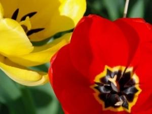 ดอกไม้แดง222 360