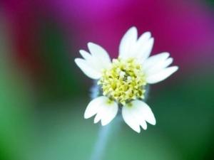 ดอกไม้ขาว20 360