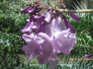 สงกรานต์2009 ทอดผ้าป่าที่ห้วยยอดจ้า