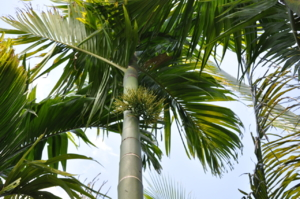 ต้นไม้ ที่วัดบ้านขัวสูง