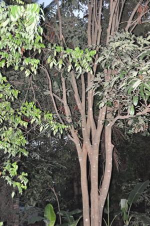 035 วัดป่า 24052552