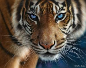 Blue Eyes Collin Bogle