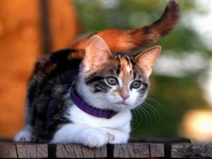 Active cat