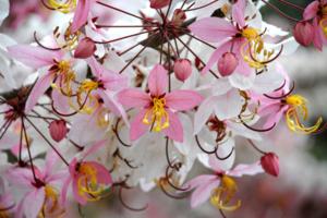 kku flower02