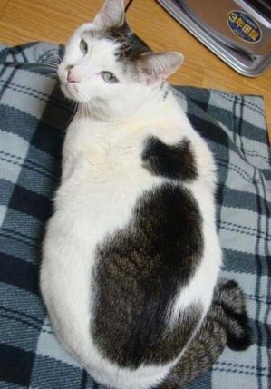 cat cat 02