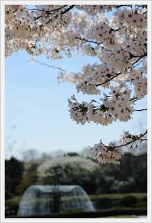 Japan... japan