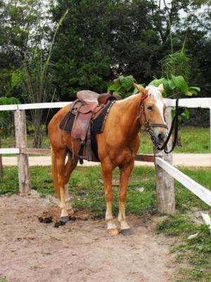 ลูกเกด ม้าจากในวัง
