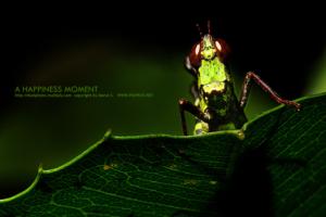 glasshopper05