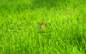 windows vista green grass big wallpapers