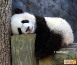 fwdDer.com   213858364 enjoy panda therapy Funzug.org 08
