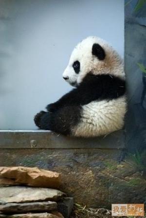 fwdDer.com   213858416 enjoy panda therapy Funzug.org 18