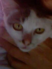 3rd cat