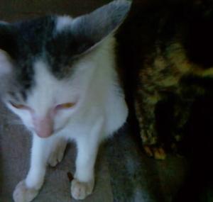 5th cat