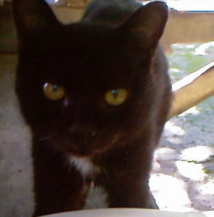 7th cat