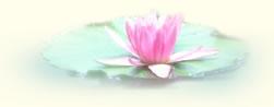 flower bibble1