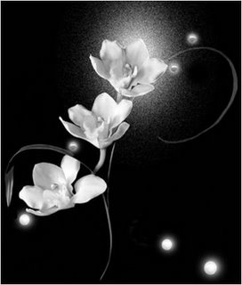 Orchid Glow gif jpg
