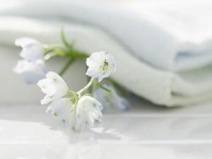 interior sweet flowers art 14008