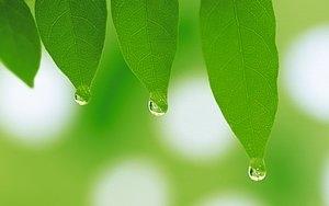 %5Bwallcoo.com%5D 2560x1600 Widescreen GreenLeaves wallpaper da035062fs 300x300