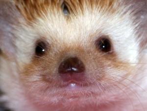 221209 Hedgehog 004