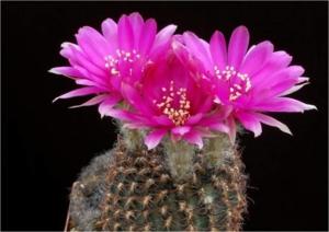 Cactus05