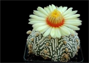 Cactus06