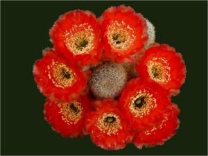 Cactus08