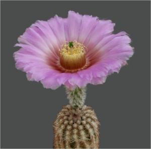 Cactus10