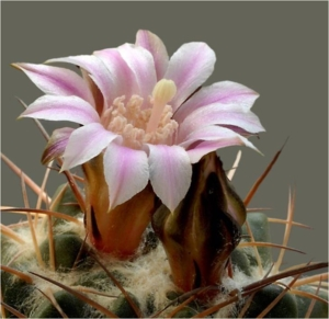 Cactus18