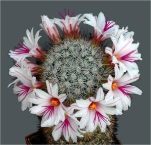 Cactus27