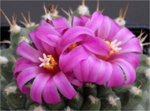 Cactus31