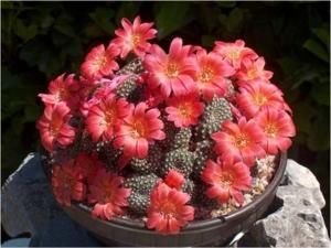 Cactus34