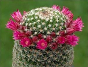 Cactus36