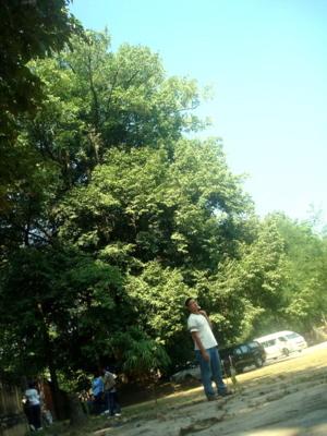 ต้นโพธิ์ วัดจอมสวรรค์ แพร่