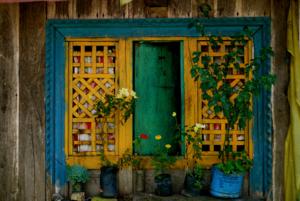 india window