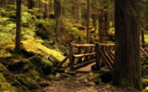 forest wallpaper 2560x1600 0005