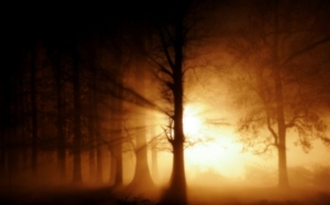 Foggy Forest Wallpaper 1