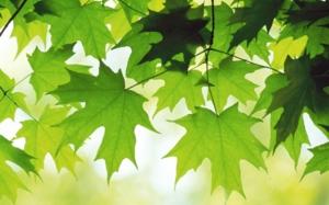 summer leaves 1440x900