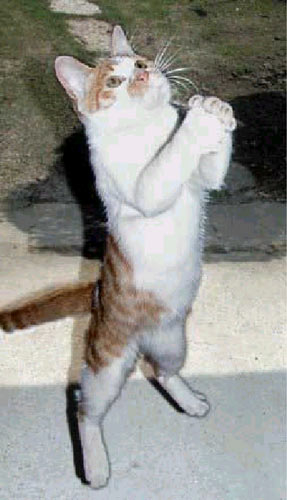 pray cat large
