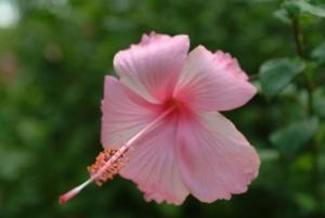 ดอกไม้ในอุทยานร.2 สวยดีค่ะ เอามาฝาก
